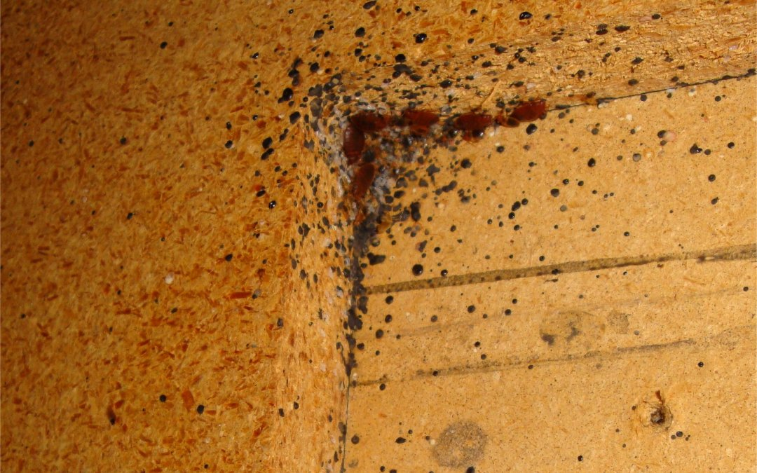 signs of a pest infestation