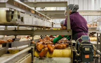 Preventing Infestation: Pest Control in Food Processing Plants