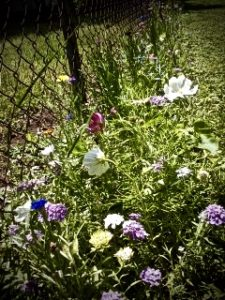 Picture0628161315_7