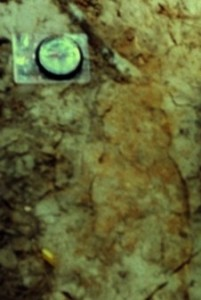 Sasquatch 2004 : l'empreinte de pied de Bigfoot