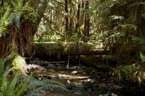 Forêt en Colombie Britannique