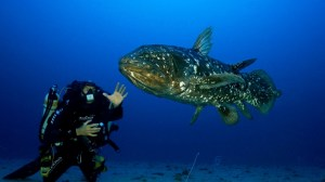 coelacanthe-plongee-fond-sous-marin-mer-plongeur-faune-sous-marine-7f2a4b-0@1x