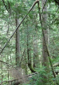 arbre cassé n°1