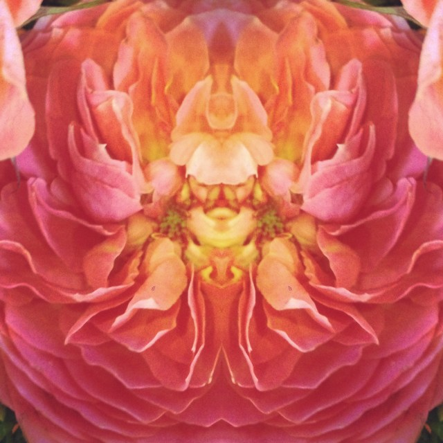 Flower Symmetry Oct 10 2014 by Darcy Rowley