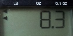 Segment display on a scale - crystalfontz.com
