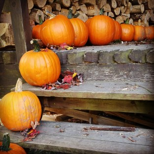 Pumpkins yet to be carved