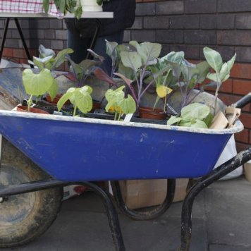 Patchwork Farm: seedlings