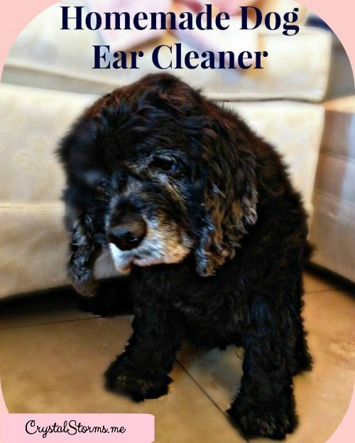 Homemade Dog Ear Cleaner