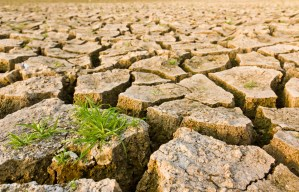 Cracked Earth with Grass - Source: P. Songsak. Cracked Earth with Grass. Digital Image. Shutterstock, [Date Published Unknown]