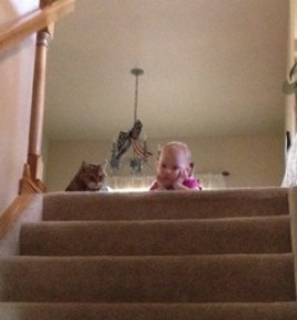 Little girl and cat looking down carpeted stairs.