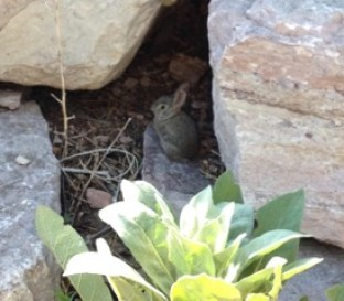 Small bunny sits in the shadow of two boulders. A sunshine lit plant of 14 leaves is in front of the bunny.
