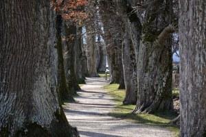 Photo of trees courtesy of Pixabay