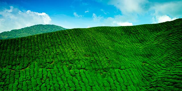 Malaysia landscape crop 0x0 - Malaysia