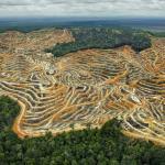87633 cb1420743955 1.adapt .1190.1 - Shangri-la Talk: Navigating Environmental Loss & Cultural Change on the Kapuas River of Borneo