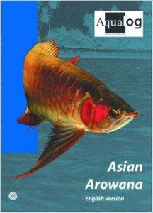 AsianArowana  216x300 - The Dragon Fish of Southeast Asia