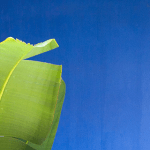 palm leaf on blue background