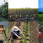 slider image: Thai agriculture