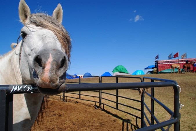 horse-in-corral-at-big-camp