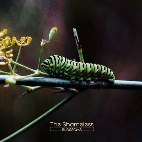 La copertina del disco degli Shameless