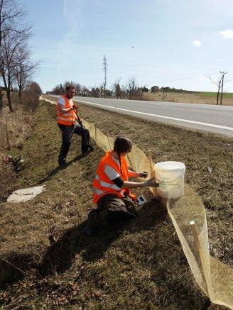 Stavba migračních zábran u Šumavských Hoštic (foto J. Hromasová)