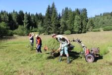 Výhrab biomasy při kosení podmáčených luk v PR Radost (foto J. Hromas)