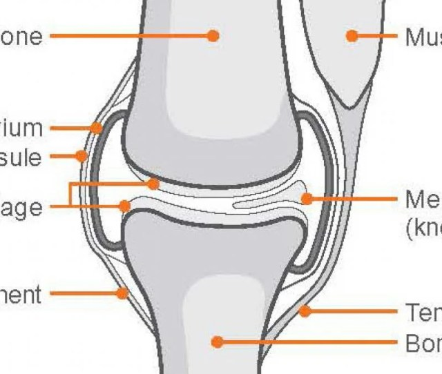 How Does The Knee Work