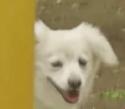 柳俊太郎 NANAMI 愛犬