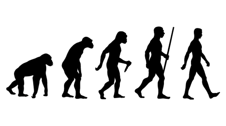 The evolution of the modern human.