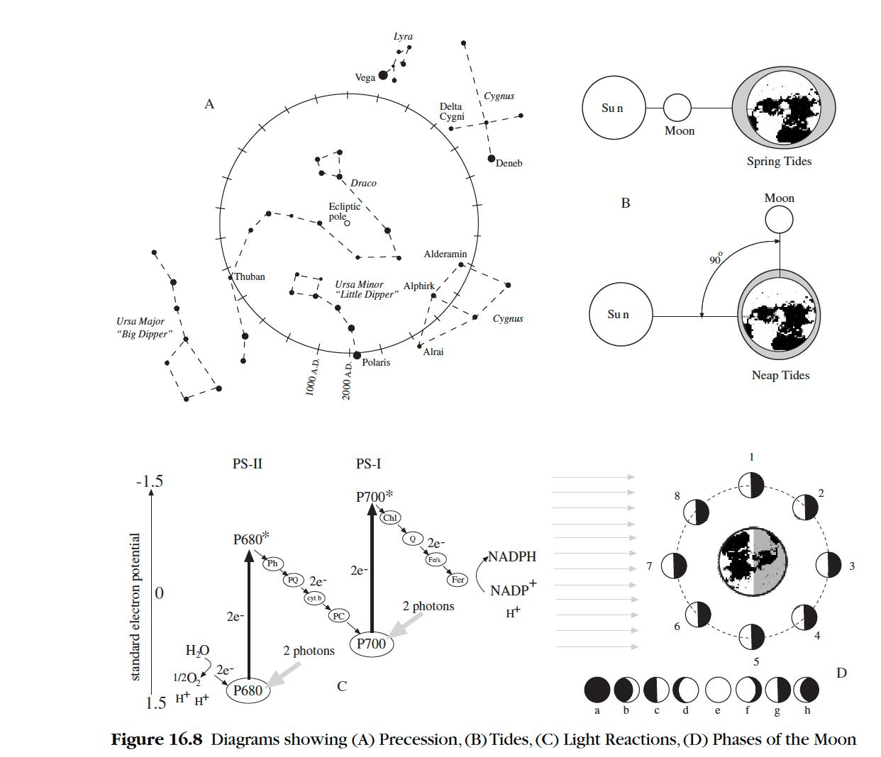 Interpreting Scientific Diagrams