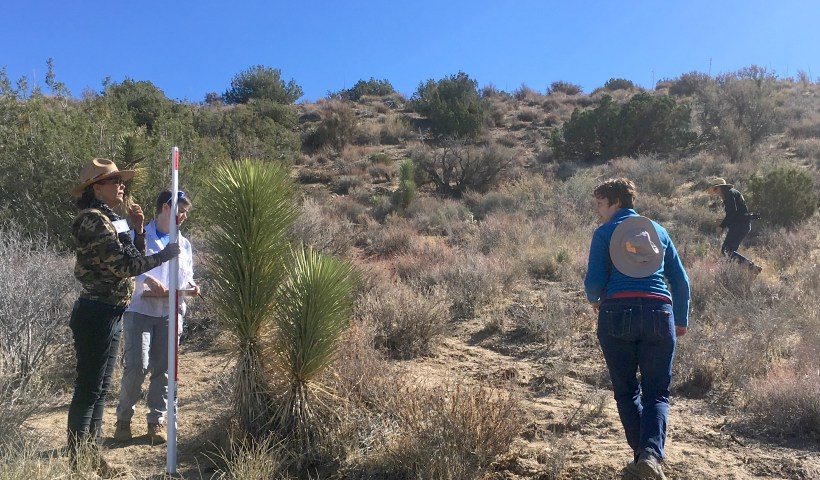Volunteer leaders measure a Joshua tree during a pilot run of the survey protocol. (Photo by Jeremy Yoder.)