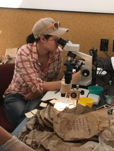 Lead author Rachel Larson takes a close look at a scat sample under a dissecting scope. (Rachel Larson)