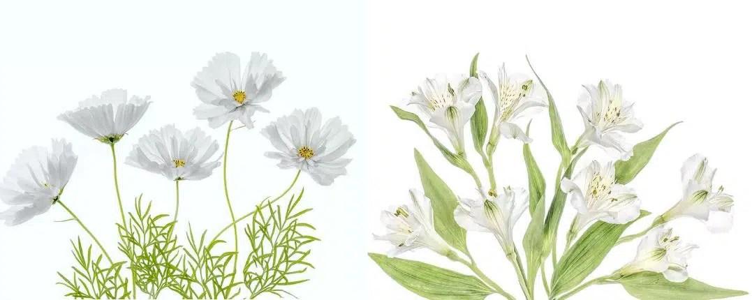 fleurs blanches la liste des 30 plus