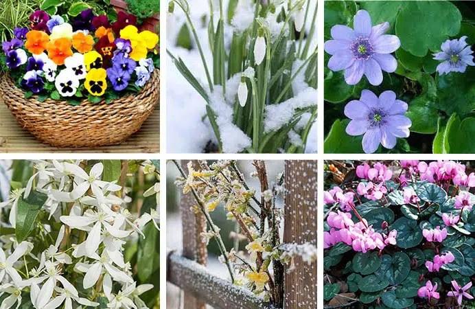 fleurs d hiver la liste des 30 fleurs