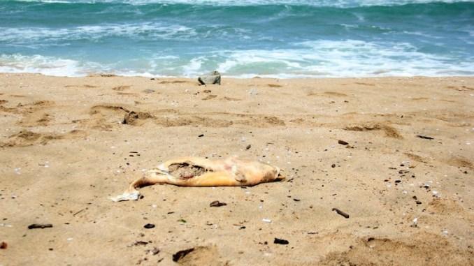 Delfin mort pe plajă. FOTO Facebook