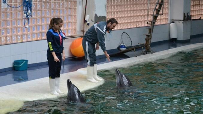 Antrenamentul delfinilor. FOTO Adrian Boioglu