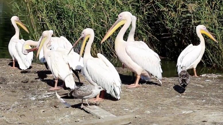 Păsări sălbatice la Delfinariul Constanța