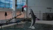 Pentru un delfin bine dresat, mâncarea e mai gustoasă la înălțime. FOTO Adrian Boioglu