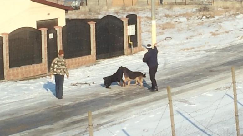 Lupte de câini la Valu lui Traian. FOTO Captură video