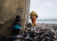Mai multe scoici decât nisip. FOTO Viorel Papu