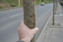 Arborii nu depășesc grosimea unei mâini. FOTO Adrian Boioglu