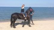 Plimbări cu cai pe plaja din Mamaia
