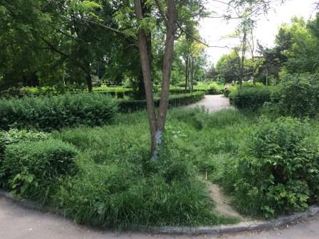 Buruieni în parcul de la Medgidia. FOTO Adrian Boioglu