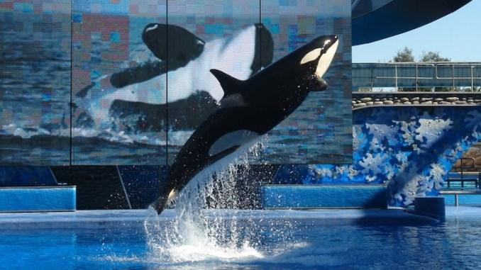 Balena de la Seaworld. FOTO wikipedia