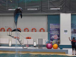 Delfin din noul Delfinariu din Constanța. FOTO Adrian Boioglu