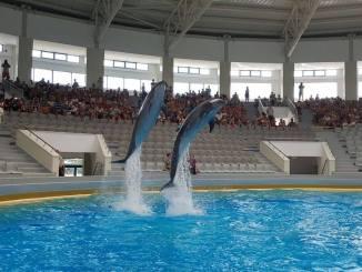 Delfinii, în noul Delfinariu din Constanța