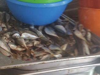Pește stricat la o terasă din Mamaia