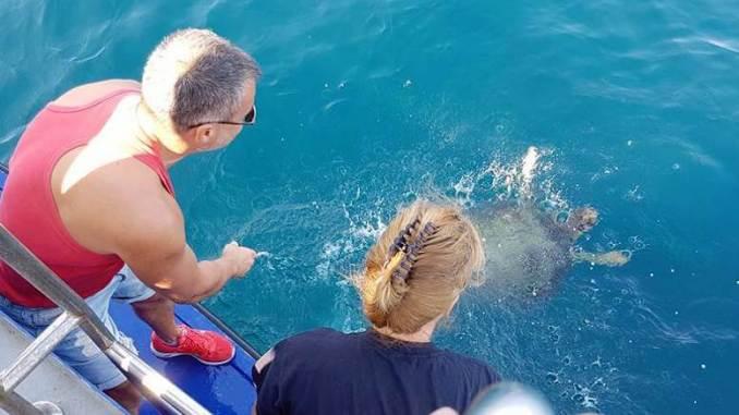 Broasca țestoasă a fost eliberată în mare