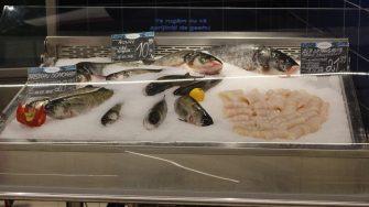 Pește la cora City Park Mall. FOTO Adrian Boioglu
