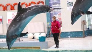 Spectacol cu delfini la Delfinariu Constanța. FOTO Adrian Boioglu
