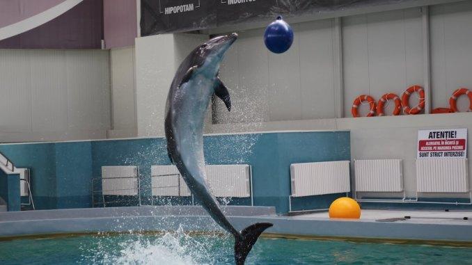 Delfin de la Delfinariul Constanța. FOTO Adrian Boioglu